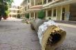 Hải Phòng rà soát cây phượng trong trường học