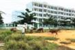 Quảng Nam lập tổ công tác gỡ vướng cho dự án 23 năm chưa hoàn thành