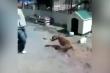 Người đàn ông trả giá đắt vì trêu chó