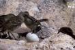 Video: Phát hiện loài chim hút máu ở đảo Galapagos
