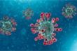 Virus gây dịch Covid – 19 đã 'tiến hóa' thành 2 nhóm khác hẳn nhau