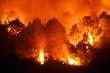Thủ tướng:  Không để lặp lại cháy rừng trên diện rộng như năm 2019