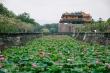 Hoa sen nở rộ tại kinh thành Huế hút hồn người xem
