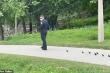 Video: Cảnh sát Mỹ dẫn đàn vịt con đi tìm mẹ