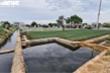 Nông dân tưới rau bằng nước thải ô nhiễm: Chủ tịch TP Bắc Ninh chỉ đạo xử lý