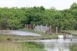 Doanh nghiệp tự ý 'phát canh thu tô' gần 400ha đất bãi bồi ven biển ở Hải Phòng