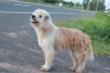Con chó 4 năm đứng ở ngã tư đường đợi chủ