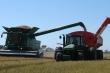 Australia thiếu gạo do dịch COVID-19 và hạn hán kéo dài