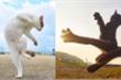 Bắt quả tang hội mèo 'luyện võ công', kỹ thuật đạt mức thượng thừa thế này đây