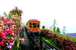 Sun World Fansipan Legend nhận kỷ lục 'Thung lũng hoa hồng lớn nhất Việt Nam'