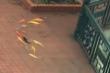 Cảnh thơ mộng ngày lụt: Cá vàng kéo nhau bơi tung tăng trên sân trường