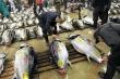 Clip: Xem cách người Nhật Bản đấu giá cá ngừ ở chợ