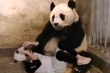 Cú giật mình của gấu mẹ khi  biết nhận nhầm con