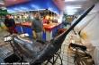Kinh ngạc cá kiếm khổng lồ 300kg dài hơn 3,8m