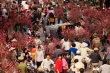 Tục đi chợ Tết - Nét đẹp văn hóa lâu đời của người Việt