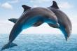 Cá heo có thực sự là loài thông minh nhất thế giới?