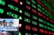 Cổ phiếu doanh nghiệp liên quan ông Trịnh Sướng giảm 'sập sàn'