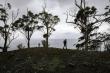 Australia nắng nóng kỷ lục, sinh vật biển bị 'nấu chín'