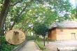 2 kẻ đi ô tô Innova trèo tường, chặt trộm hai cây sưa đỏ ở Bảo tàng dân tộc học Việt Nam