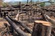 Đắk Lắk họp khẩn liên huyện bàn giải pháp ngăn chặn phá rừng