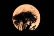Chiêm ngưỡng hiện tượng 'trăng dâu tây' tuyệt đẹp trên khắp thế giới