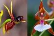 5 loài hoa lạ lùng nhưng có hình dáng quen thuộc khiến ai thấy cũng ngạc nhiên
