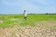 Hạn, mặn khốc liệt  ở ĐBSCL: Ruộng nứt toác, kênh trơ đáy