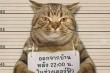 Mèo bị cảnh sát bắt