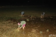 Ảnh: Tránh nắng nóng, nông dân Nghệ An thắp đèn nhổ mạ, cấy lúa về đêm