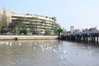 Cận cảnh 130 con thiên nga thả xuống sông Tam Bạc, Hải Phòng dịp sinh nhật Bác