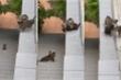 Cảnh đàn mèo kiên nhẫn dìu mèo con vượt mái nhà khiến nhiều trái tim tan chảy