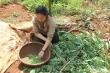 Chuyện lạ: Người dân Tây Nguyên săn sâu muồng để ăn
