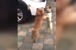 Chết cười xem 2 chú chó đang đánh nhau bỗng nhảy Tango