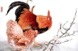 Tử vi 12 con giáp ngày 4/9: Tuổi Dậu sức khỏe sa sút