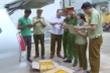 Thanh Hóa: Bắt giữ hơn 5.000 lọ thuốc bảo vệ thực vật không rõ nguồn gốc