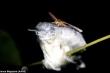 Video: Bướm đêm cả gan vạch mắt của chim ngủ say, uống trộm nước mắt