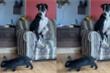 Clip: Chó sợ thỏ, run rẩy ngồi trên ghế không dám xuống