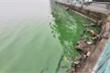Nước hồ Tây chuyển màu xanh bất thường, người dân lo lắng