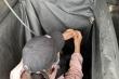 Trốn trong thùng xe né chốt kiểm dịch, 3 người bị phạt 60 triệu đồng
