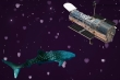 Mối liên kết ít ai ngờ giữa kính Hubble và cá mập voi