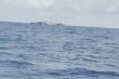 Yêu cầu Trung Quốc điều tra, xác minh vụ đâm tàu cá Việt Nam ở Hoàng Sa