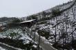 Nhiệt độ xuống 1,2°C, mưa tuyết phủ trắng Sapa