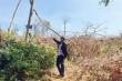 Rừng Đắk Lắk liên tục bị tàn phá sau Tết: Khởi tố vụ án hình sự