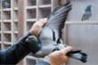 Video: Chim bồ câu đắt nhất thế giới có giá gần 1,9 triệu USD