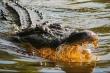 Video: Ngư dân Australia câu nhầm cá sấu khổng lồ