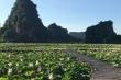 Hang Múa Ninh Bình đẹp thơ mộng mùa sen nở