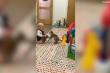 Clip: Em bé 'chiến đấu' với chú khỉ để giành đồ chơi