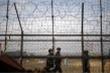 Cựu VĐV Triều Tiên nhảy rào đào tẩu, Hàn Quốc bắt nhảy lại để xác minh lời khai