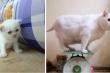 Loạt ảnh mèo cưng 'dậy thì thành lợn' khiến dân mạng cười lăn