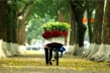 Top 5 địa điểm chụp ảnh mùa thu đẹp đến nao lòng ở Hà Nội